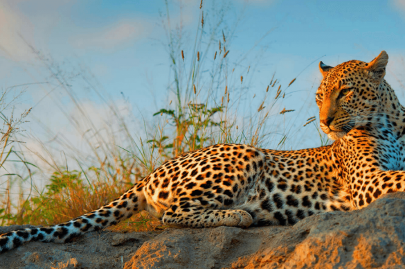 10 Reasons to Try a South African Safari and Wildlife Tour