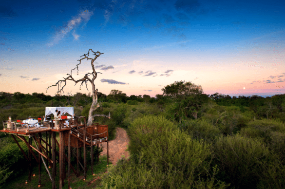 The Top Rated Treehouse Safari Lodges in Kruger and Sabi Sands Game reserve